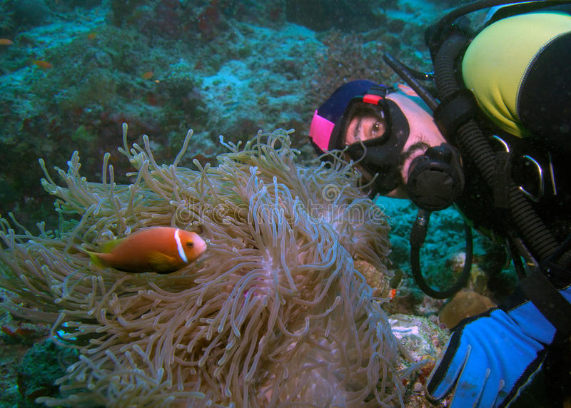 Actinie l'explorant de plongeur avec des clown-poissons photo libre de droits
