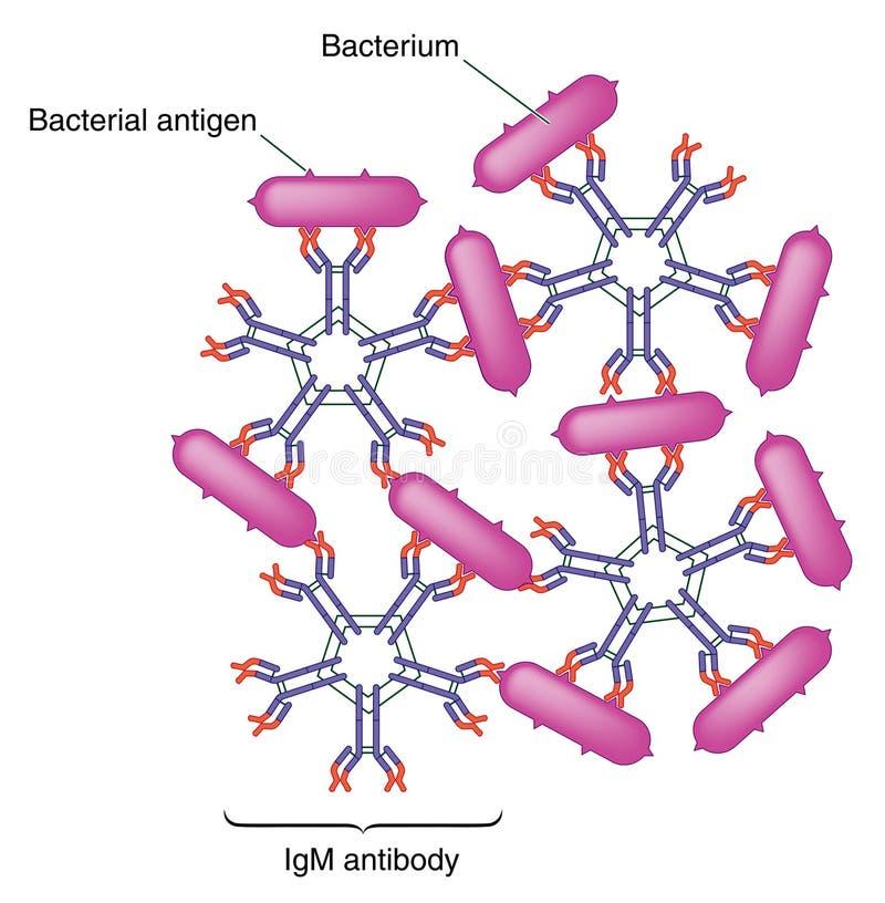 Action d'anticorps illustration de vecteur