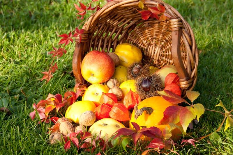 Action de grâces - panier coloré d'automne avec des fruits image stock