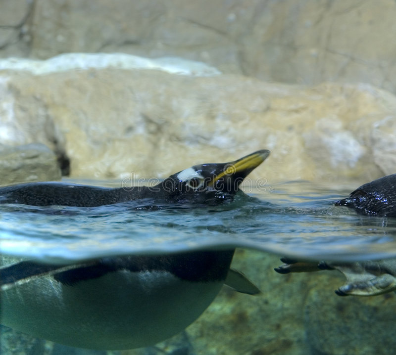Action de Pinguin images libres de droits