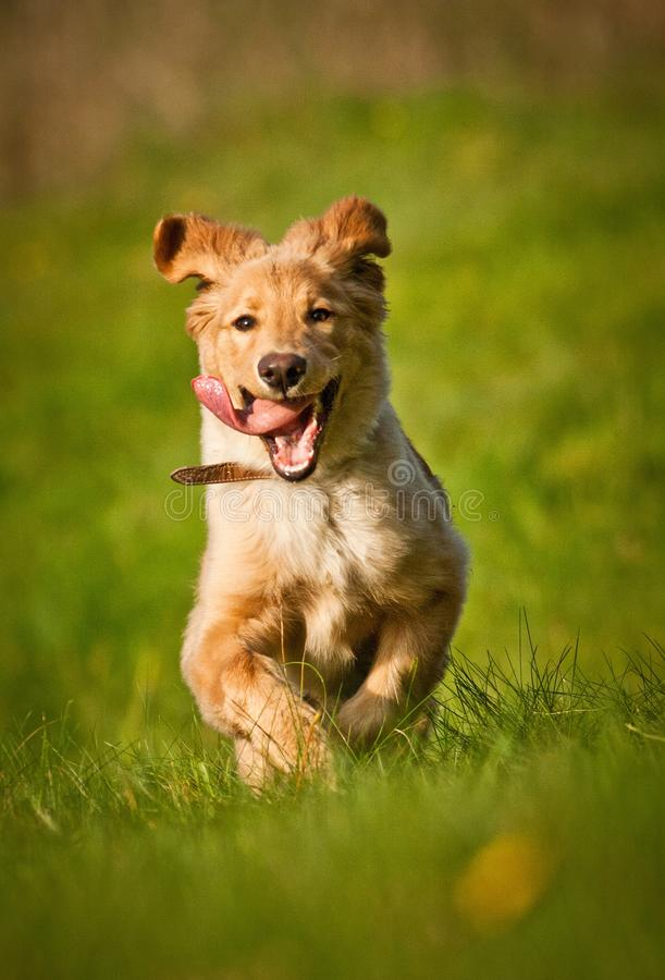Action dog stock photos