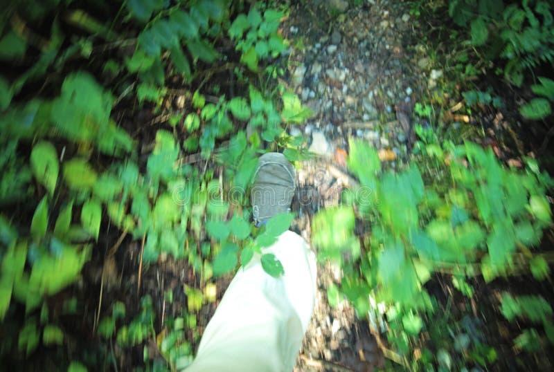 Action Forest Path de marche photographie stock