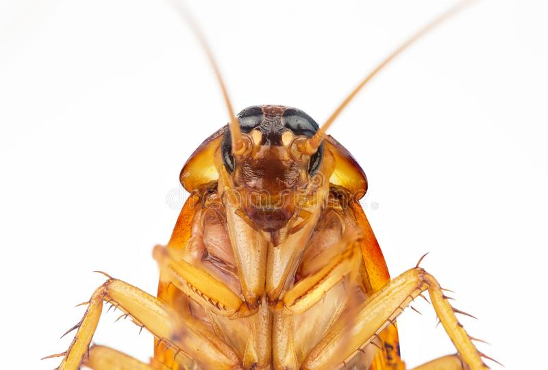Action image of Cockroaches stock photography