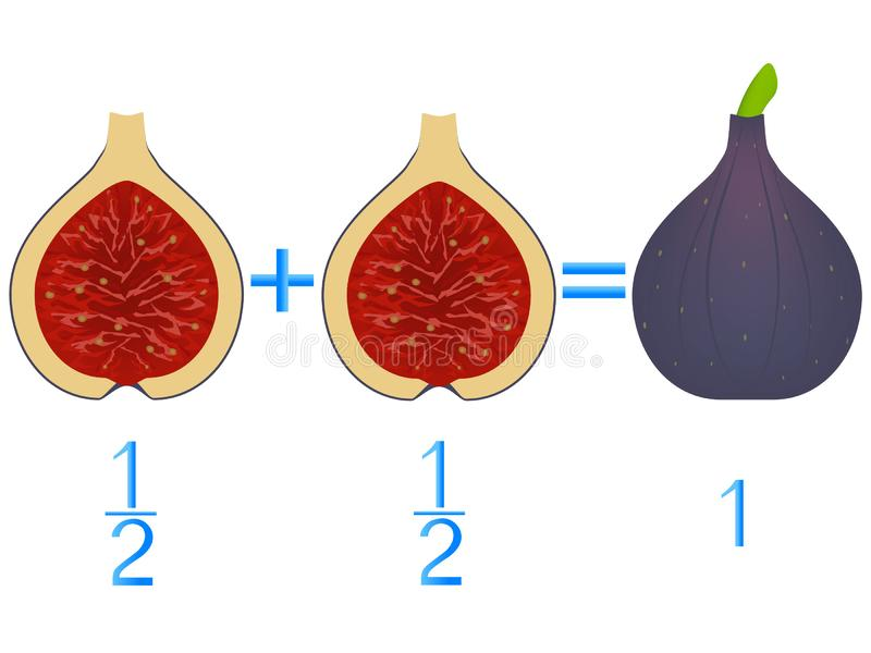 Action relationship of addition halves, examples with figs. Educational game for children. Action relationship of addition halves, examples with figs stock illustration