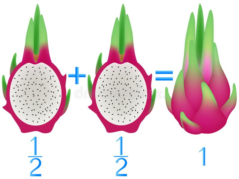 Action relationship of addition halves, examples with pitahaya. Educational game for children. Action relationship of addition halves, examples with pitahaya stock illustration