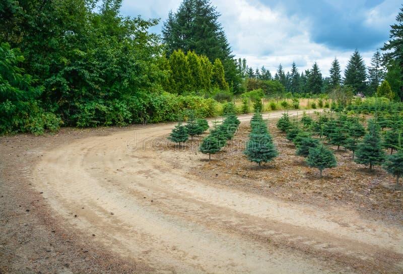 Actions de plantation des pins à la route photos libres de droits