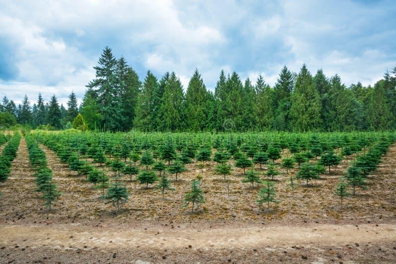 Actions de plantation des pins à la route images libres de droits