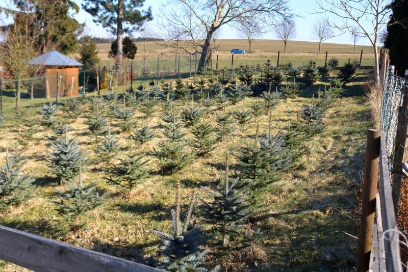 Actions de plantation des pins photos libres de droits