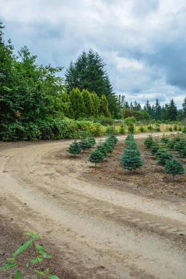 Actions de plantation des pins ? la route photos libres de droits
