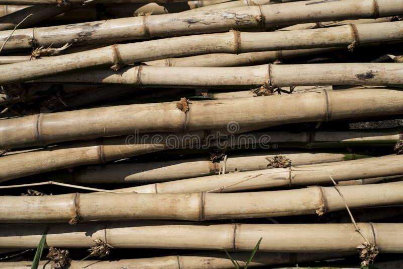 Actions des poteaux en bambou photos libres de droits