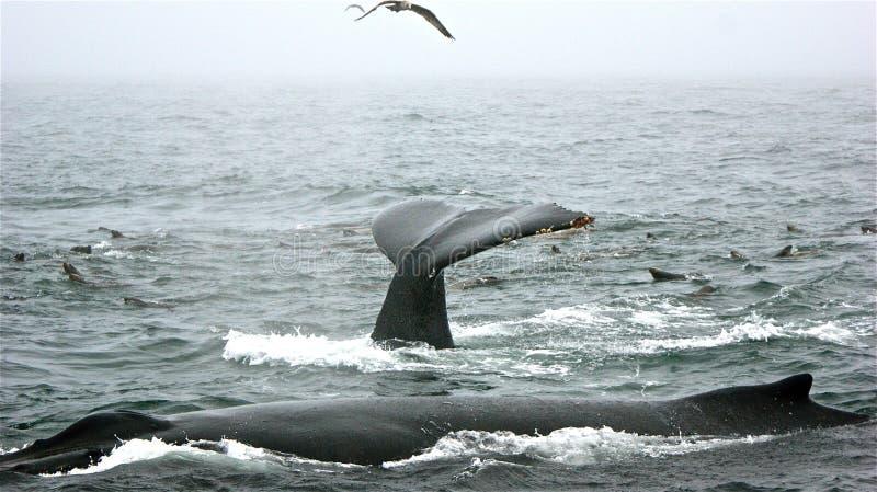 Actitud de la ballena fotos de archivo libres de regalías