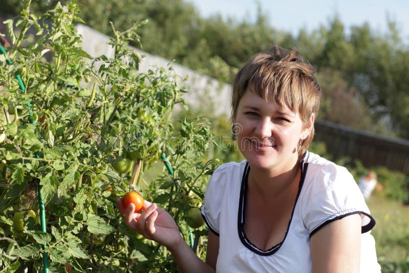 Actitudes de la mujer con las plantas de tomate imágenes de archivo libres de regalías