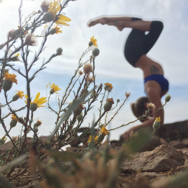 Actitudes de la yogui fotografía de archivo libre de regalías
