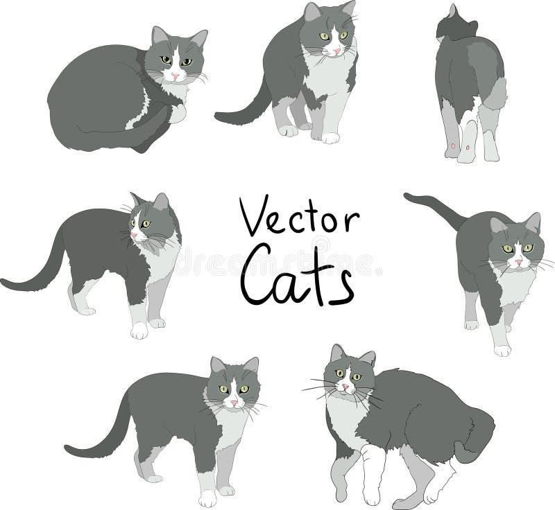 Actitudes de los gatos fijadas stock de ilustración