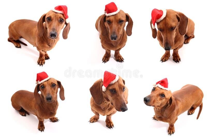 Actitudes del perro de la Navidad fotografía de archivo