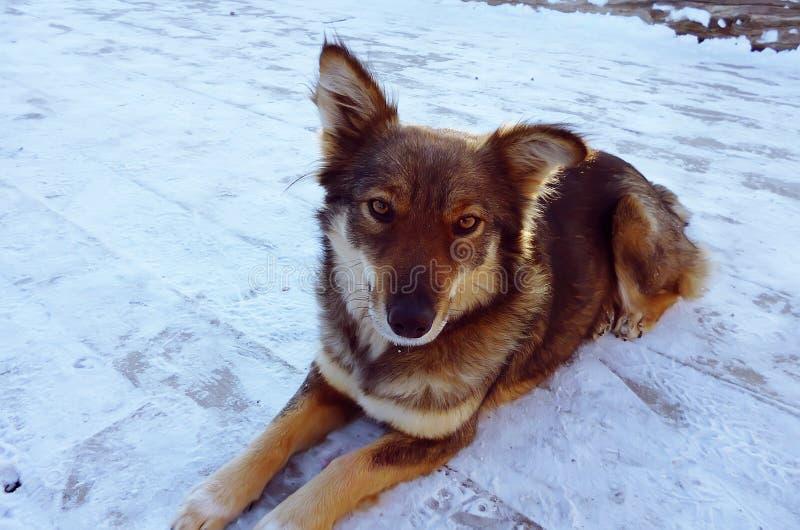 Actitudes del perro en la nieve foto de archivo libre de regalías