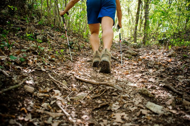 Active athlete climbs up the forest using special equipment for Nordic walking royalty free stock photos