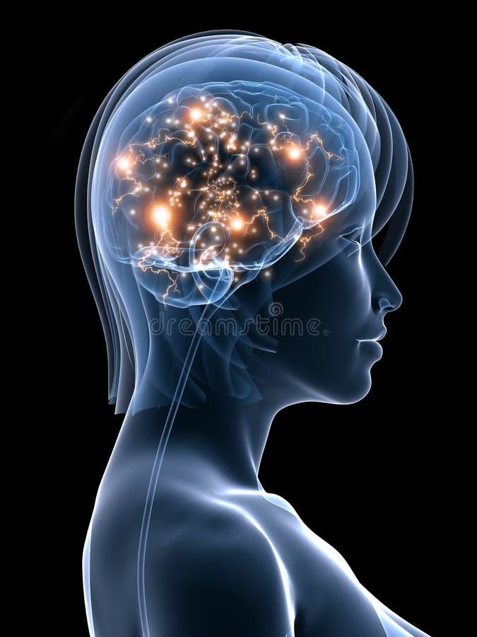 Active brain stock illustration
