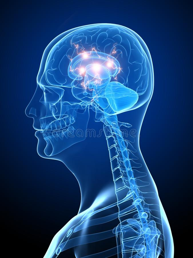 Download Active brain stock illustration. Illustration of thoughts - 14138866