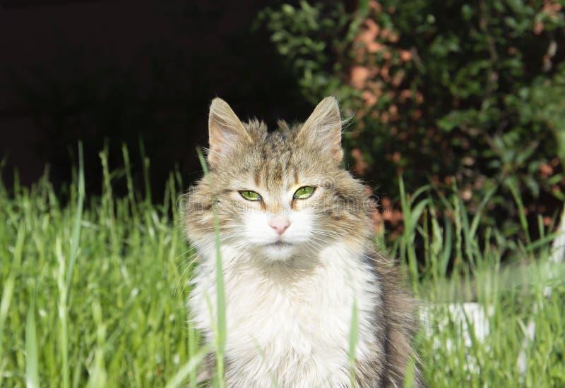 Predatory cat with beautiful eyes royalty free stock photos