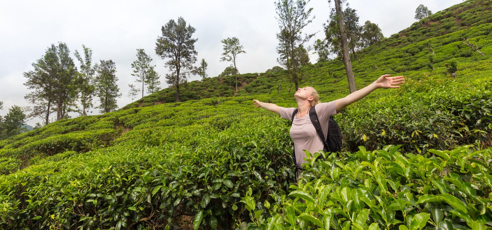 Active caucasian blonde woman enjoing fresh air and pristine nature while tracking among tea plantaitons near Ella, Sri royalty free stock photos