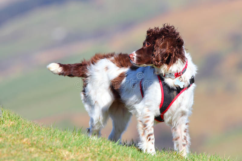 Active outdoor healthy dog stock image