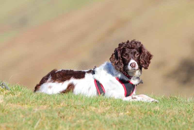 Active outdoor healthy dog stock photos