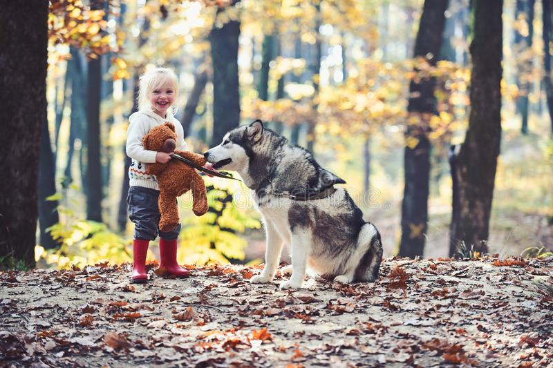 Active rest and child activity on fresh air outdoor. Active girl play with dog in autumn forest.  royalty free stock photos