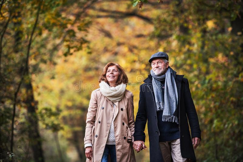 Senior couple walking in a forest in an autumn nature, holding hands. royalty free stock images