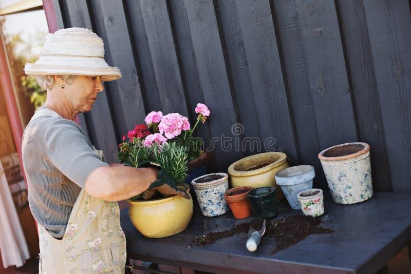 Active senior woman planting new plants in terracotta pots stock photos