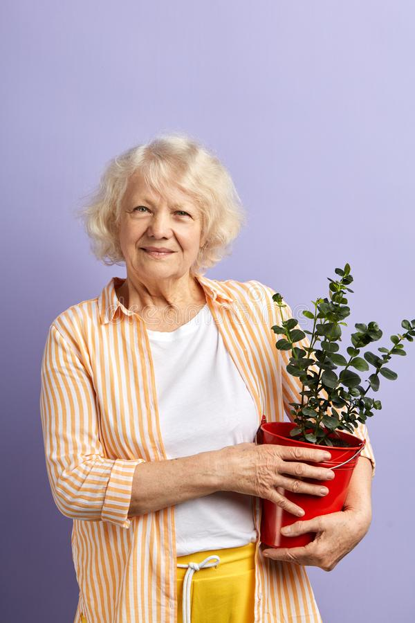 Active senior woman smiling at camera keeping potted plant in hands. royalty free stock photography