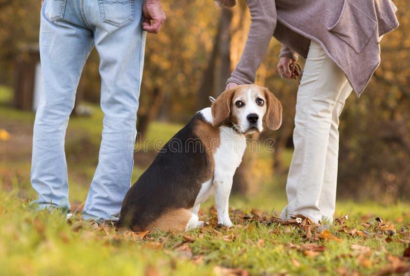Active Seniors. Walking dog in nature royalty free stock image