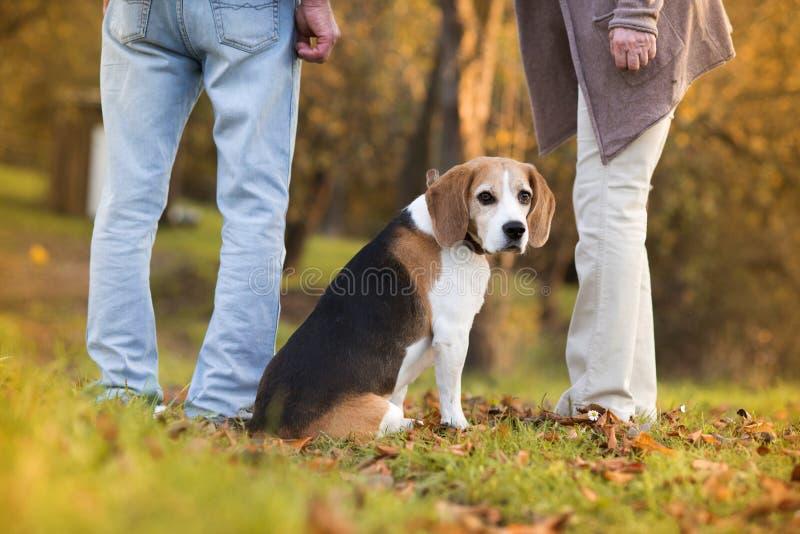 Active Seniors. Walking dog in nature stock photos