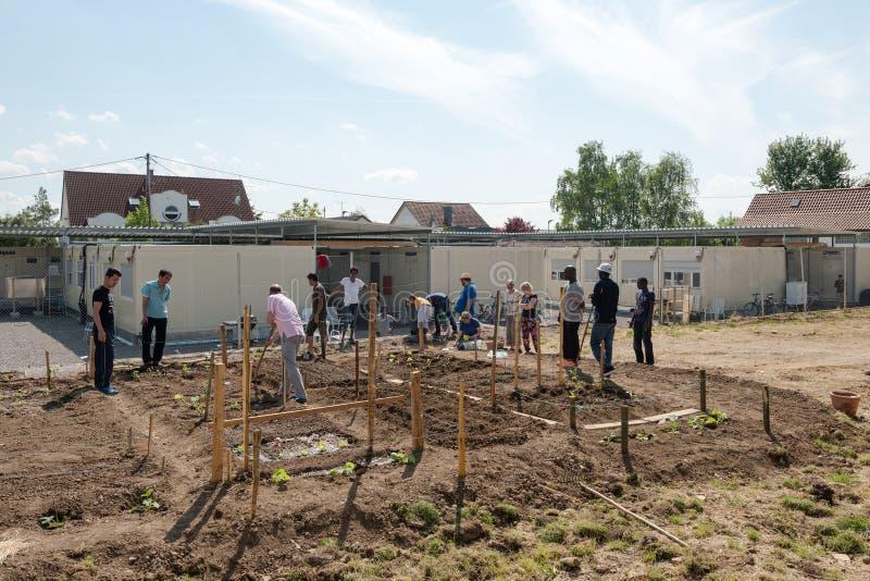 Actividades que cultivan un huerto en un campamento de refugiados alemán fotografía de archivo