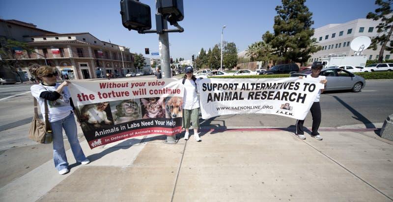 Activista dos direitos dos animais no protesto do UCLA foto de stock