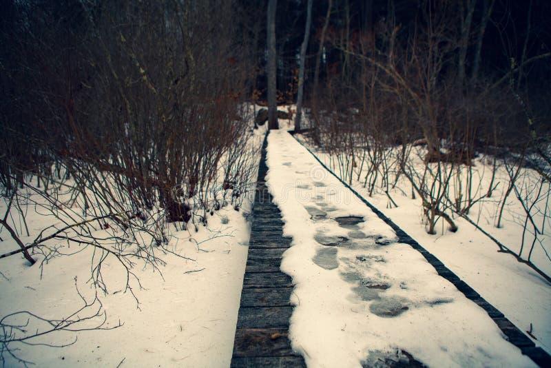 Acton, Etats-Unis, le 27 février 2019 Bois sauvage sous l'exposition pendant l'horaire d'hiver dans la région herbeuse de conserv photographie stock libre de droits