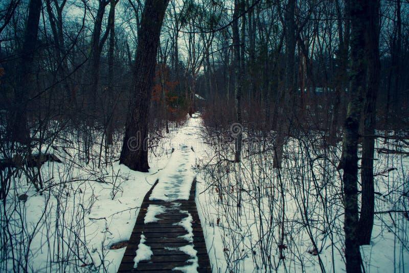 Acton, Etats-Unis, le 27 février 2019 Bois sauvage sous l'exposition pendant l'horaire d'hiver dans la région herbeuse de conserv image libre de droits