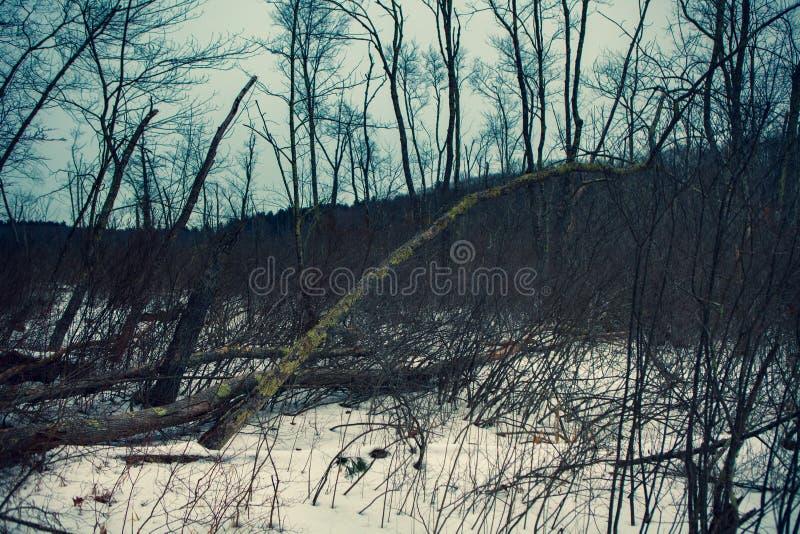 Acton, Stany Zjednoczone, Luty 27, 2019 Dziki drewno pod przedstawieniem podczas zima czasu w Trawiastym Stawowym konserwacja ter zdjęcia stock