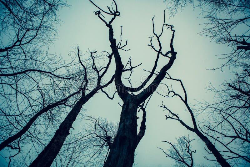 Acton, Stany Zjednoczone, Luty 27, 2019 Dziki drewno pod przedstawieniem podczas zima czasu w Trawiastym Stawowym konserwacja ter obrazy stock