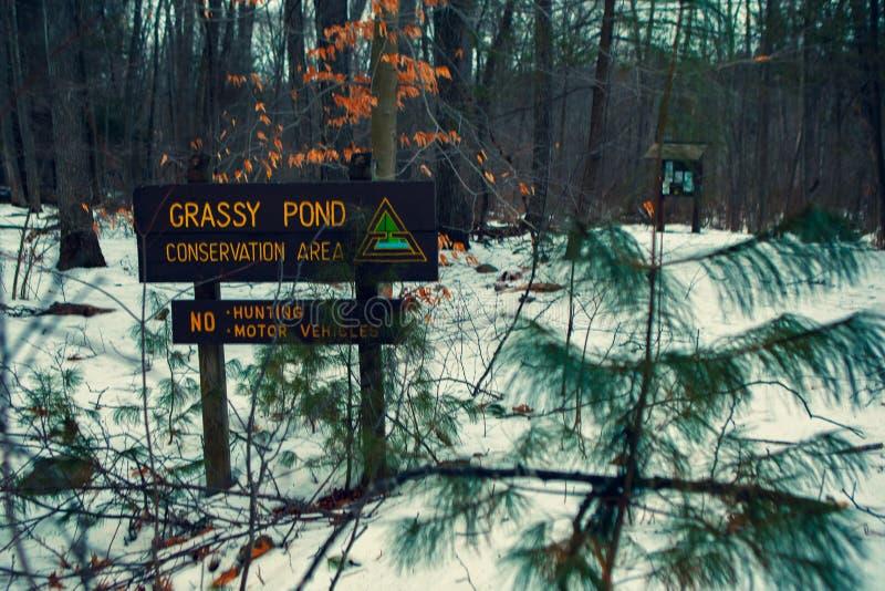 Acton, Stany Zjednoczone, Luty 27, 2019 Dziki drewno pod przedstawieniem podczas zima czasu w Trawiastym Stawowym konserwacja ter obraz stock