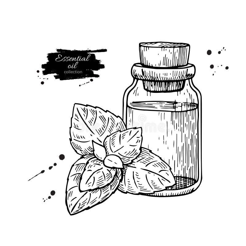 Acuñe el ejemplo dibujado mano del vector de las hojas de la botella y de la hierbabuena de aceite esencial Dibujo aislado de la  ilustración del vector