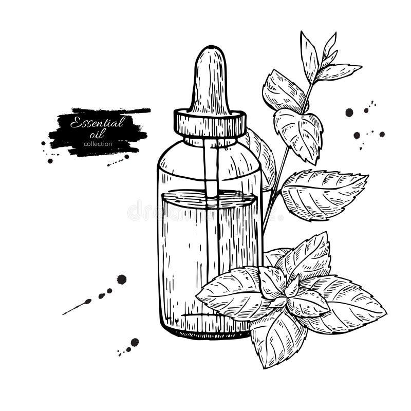 Acuñe el ejemplo dibujado mano del vector de las hojas de la botella y de la hierbabuena de aceite esencial Dibujo aislado de la  stock de ilustración