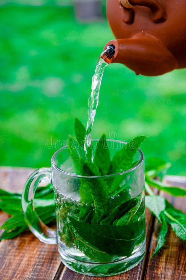 Acuñe el té que vierte en la taza de cristal en la tabla de madera en fondo del jardín y de la naturaleza imagen de archivo libre de regalías