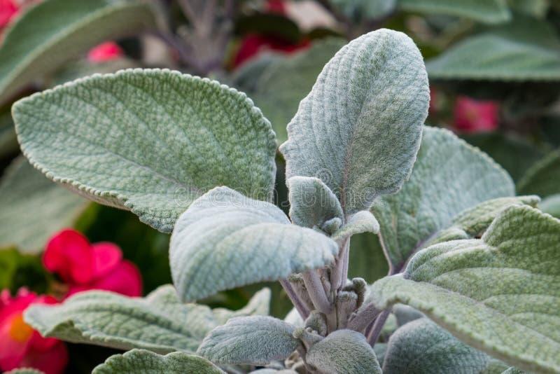 Acuñe la planta con las flores rosadas en el fondo imagen de archivo