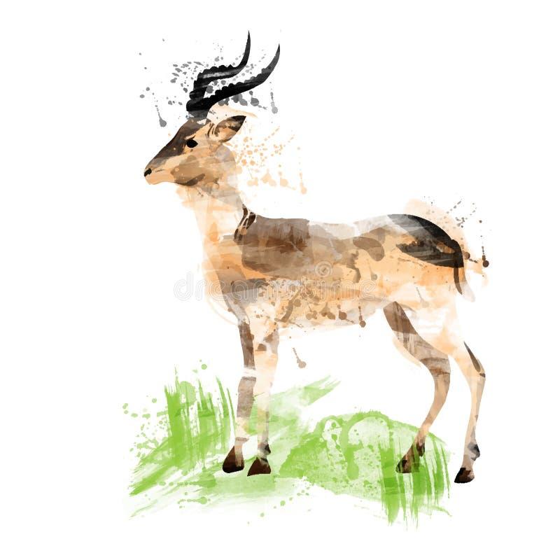 Acuarela africana de la gacela stock de ilustración