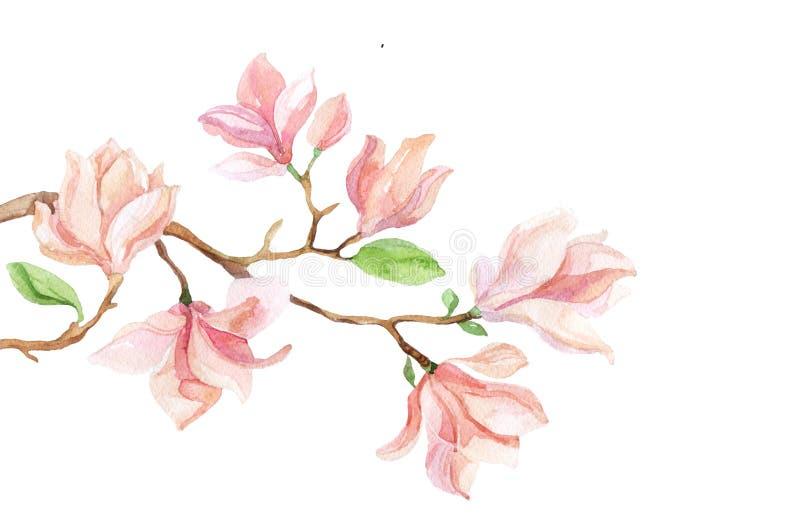 Acuarela con la flor de la magnolia stock de ilustración