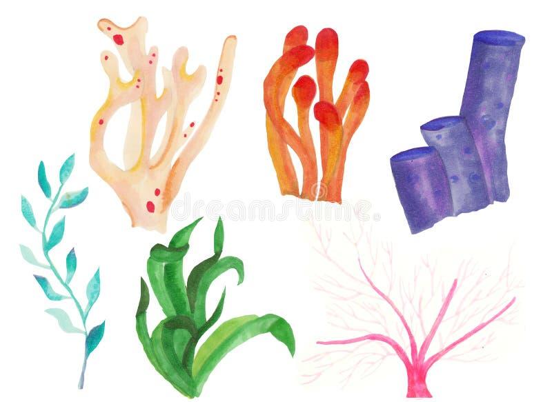 Acuarela, corales, sistema, esponja, oc?ano libre illustration