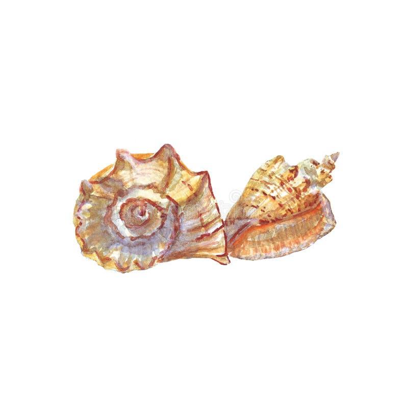 Acuarela de conchas marinas en el fondo blanco aislado stock de ilustración