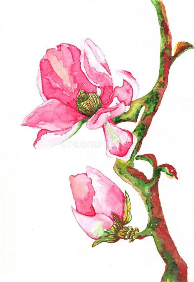 Acuarela de la flor de la magnolia stock de ilustración