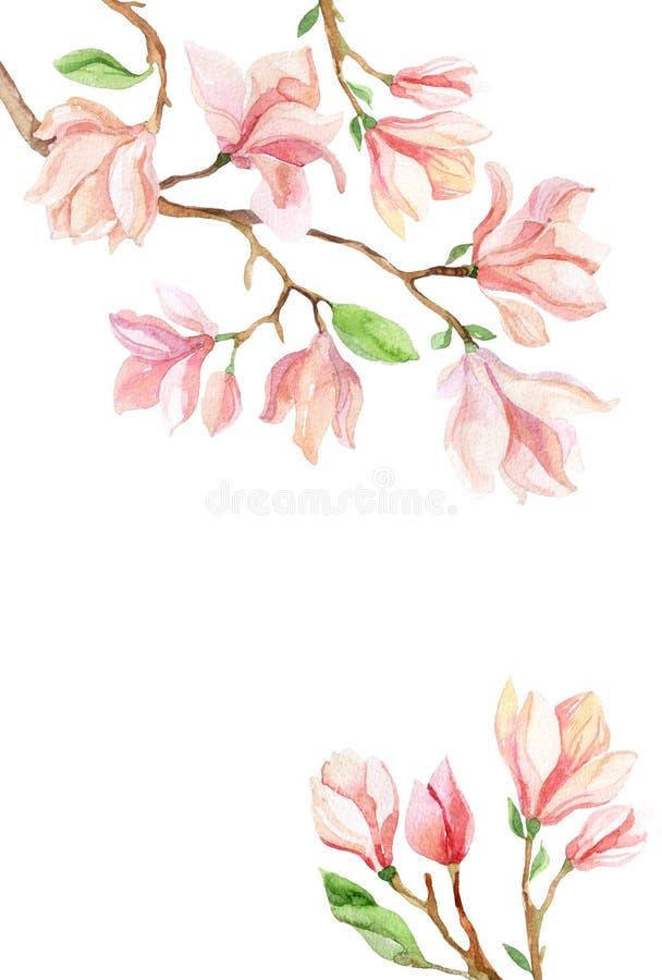 Acuarela de la magnolia stock de ilustración